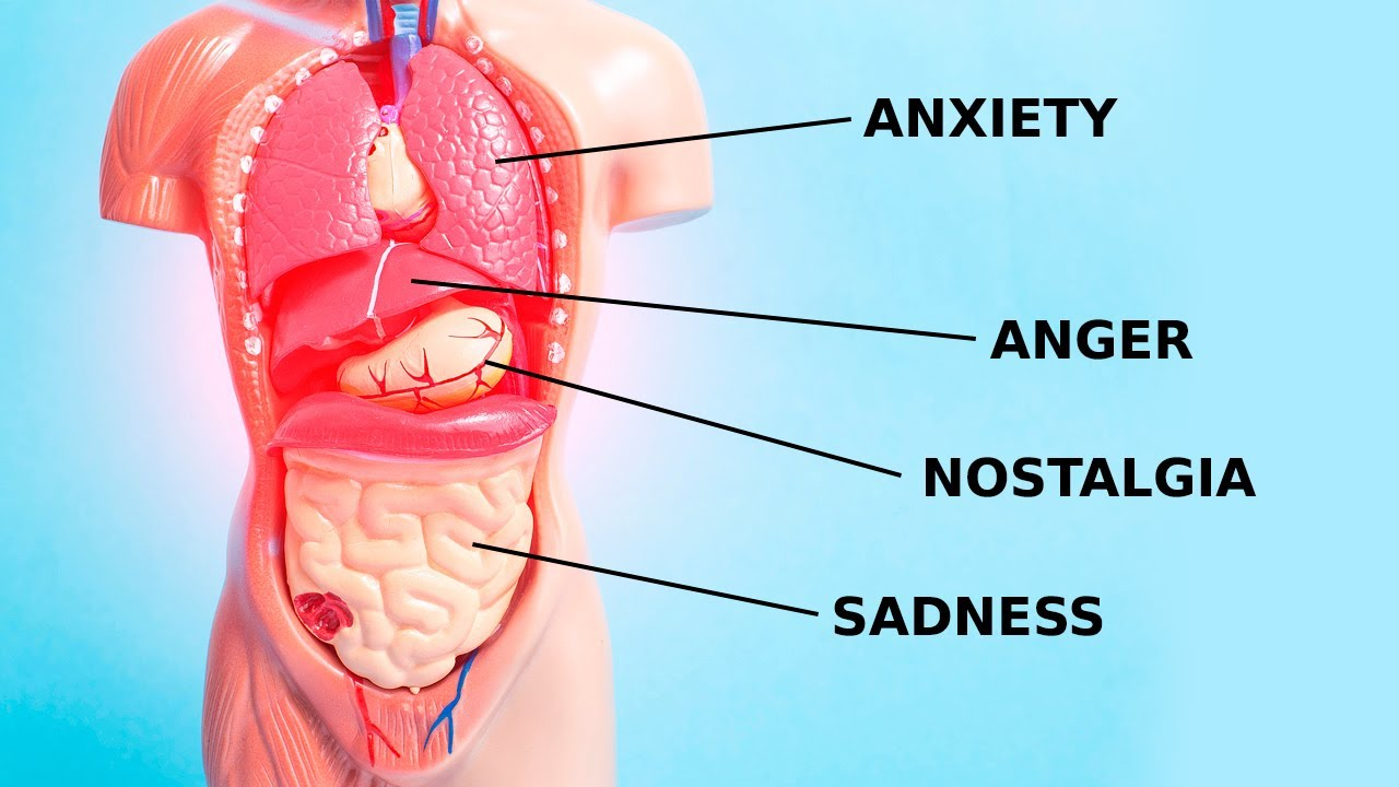 How Emotions and Organs are Connected in Chinese Medicine