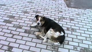 Санкт-Петербург. Собаки. Метро