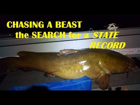 Chasing The FLATHEAD STATE RECORD- Ep 1 Best Bait For CATFISH?