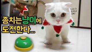 천재냥 호야모찌 벨치는고양이에 도전했습니다! 어른이된 먼치킨 아기고양이 꿀잼 동물스토리 어린이채널♡모모TV/모모토이즈