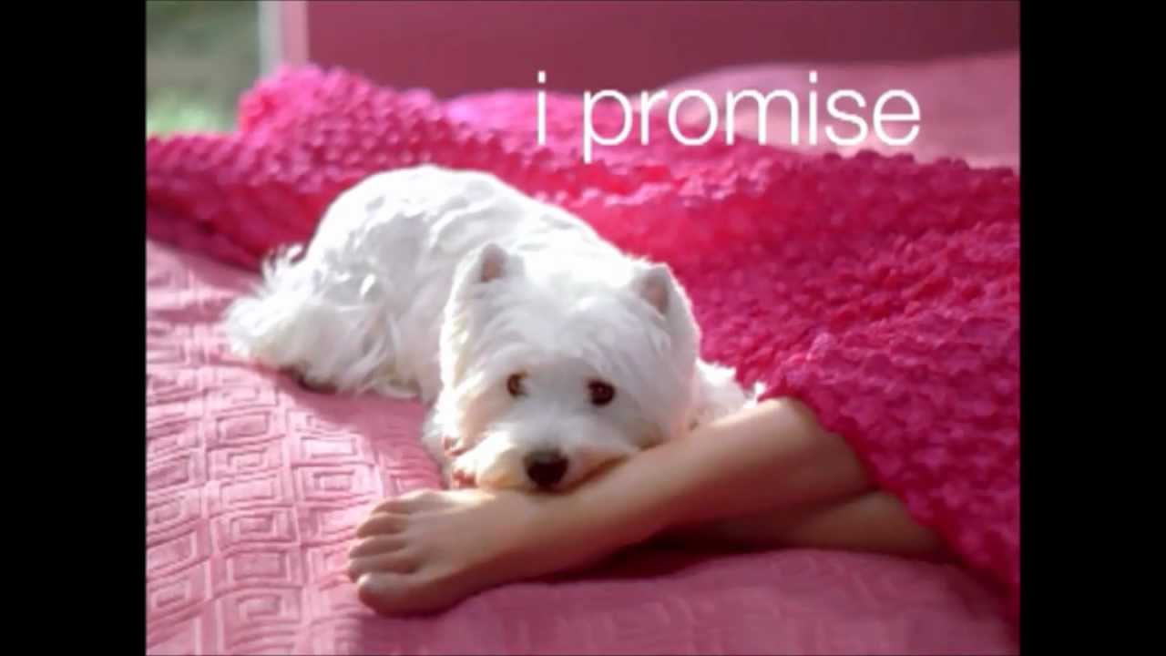 Dog Food Commercial Cute Puppy
