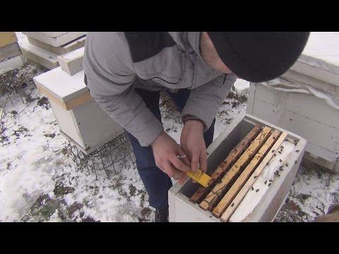 Спасаем слабую пчелосемью от гибели зимой
