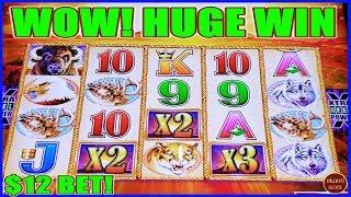 I COULD NOT STOP WINNING! $12 BET HIGH LIMIT BUFFALO GOLD SLOT MACHINE