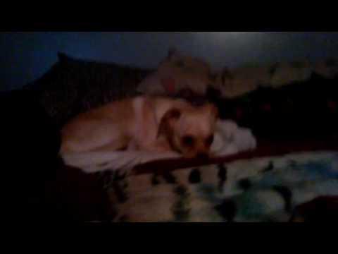 Stalking my dog XD
