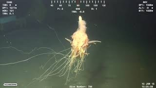 Top 5 Criaturas Misteriosas Captadas En Cámara Free HD Video