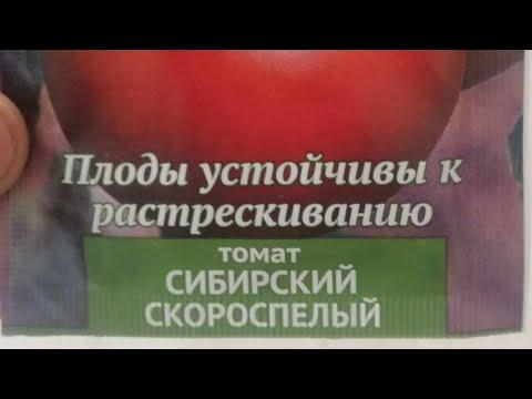 Томат сорта Сибирский Скороспелый обзор.