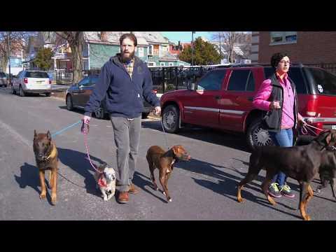 Dominic and Sam - Dog Aggression Rehabilitation