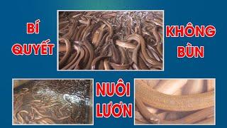 Bí quyết nuôi lươn không bùn - thủy sản