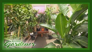 Indoor Plant Maintenance   Volunteer Gardener