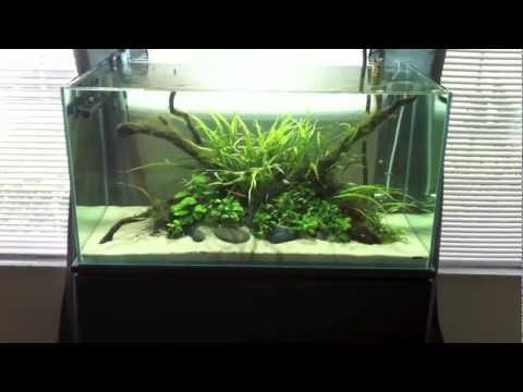 48 Gallon Mr Aqua Rimless Planted Tank Youtube