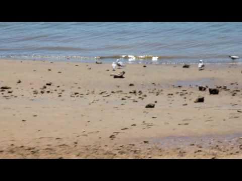 port augusta beach