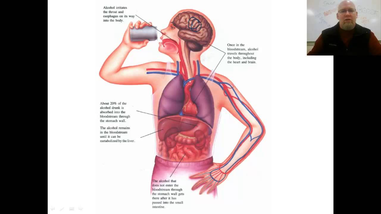 how alcoholism affects the human body To help students explore the chemical and physical effects of alcohol on these human body organ systems: the digestive system, the central nervous system, the circulatory system, and the endocrine system this lesson is part of a series created by science netlinks as part of the science inside .