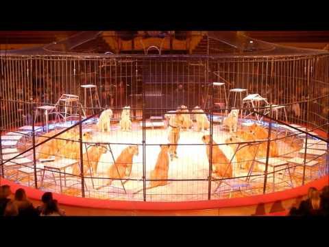 Löwen-Dressurproben im  Circus Krone mit Martin Lacey jr. Teil 1-2