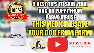 What is Canine Parvo Virus? How can we protect our puppy from Parvo virus attack( Hindi )