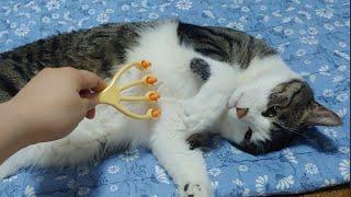 [55콩] 고양이 마사지 / 강아지 마사지 / 애완동물…