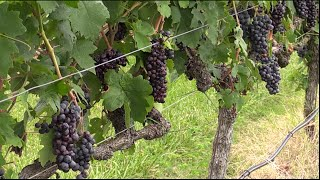 NC Wine Industry Boom