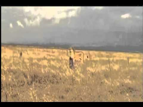 Born Free Video 2.mov