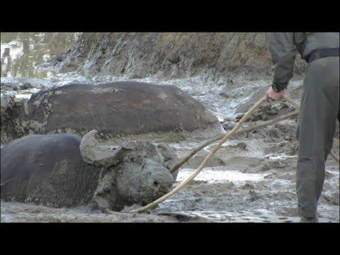 Buffalo Get SAVED