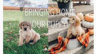 bringing home our golden retriever puppy!