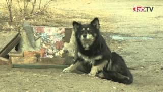 Читинских ветеринаров обязали умертвлять бездомных собак