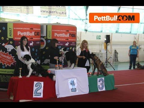 Magyar Bajnok Dog Dancing páros! 2016. Kríz Orsolya és Josephine
