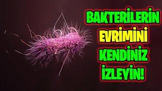 evrimi-laboratuvarda-gzlemek-bakterilerde-antibiyotik-direnci-deneyi