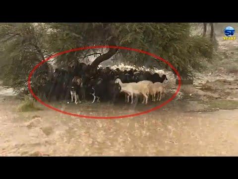 قطيع الماعز! سبحان الله عواصف بردية ورعدية وسيول مهيبة في مكة الطائف هروب بارق جازان 02.09.2020