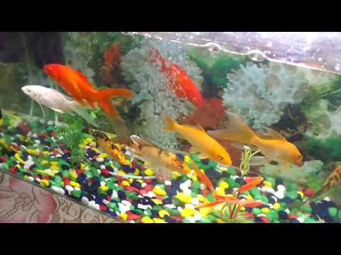fish in aquarium for kids - pond - fishing - tank -  behind the scenes  how to