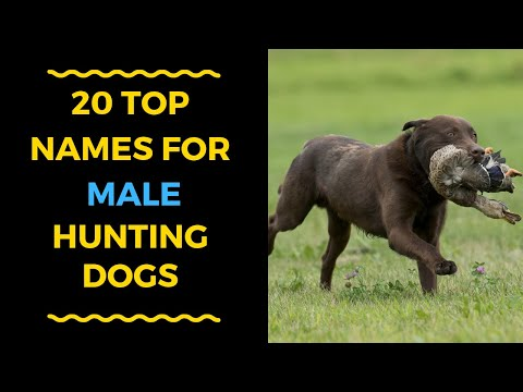 20 COOL MALE DOG NAMES FOR HUNTING DOGS