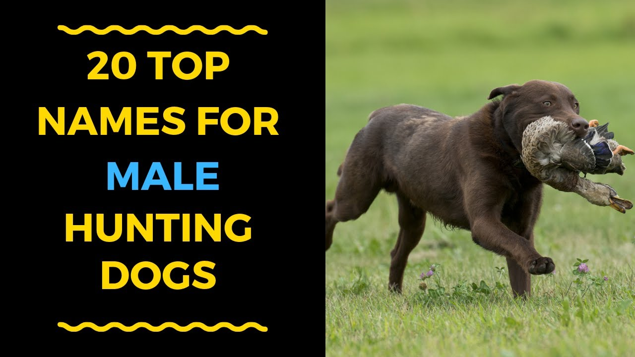 20 Cool Male Dog Names For Hunting Dogs Youtube