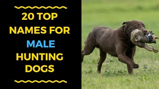 Best Hunting Dog Names