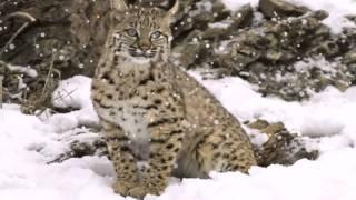 птицы и звери зимой(с любовью к братьям нашим меньшим., 2013-11-22T11:44:19.000Z)