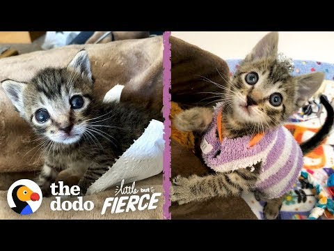 This Tiny Kitten Wears Socks As Sweaters | The Dodo Little But Fierce