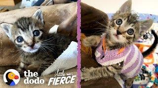 This Tiny Kitten Wears Socks As Sweaters | The Dodo Little But Fierce