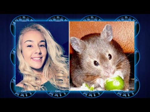 Woman claims Spirit Airlines told her to flush Hamster