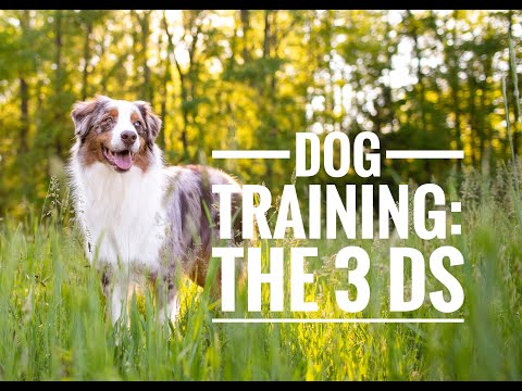 Dog Training: The 3 D's