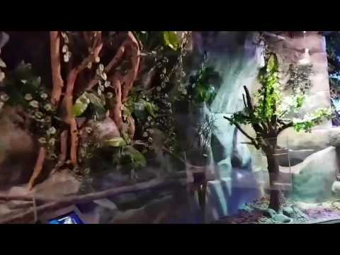 Inside jakarta aquarium at neo soho Indonesia