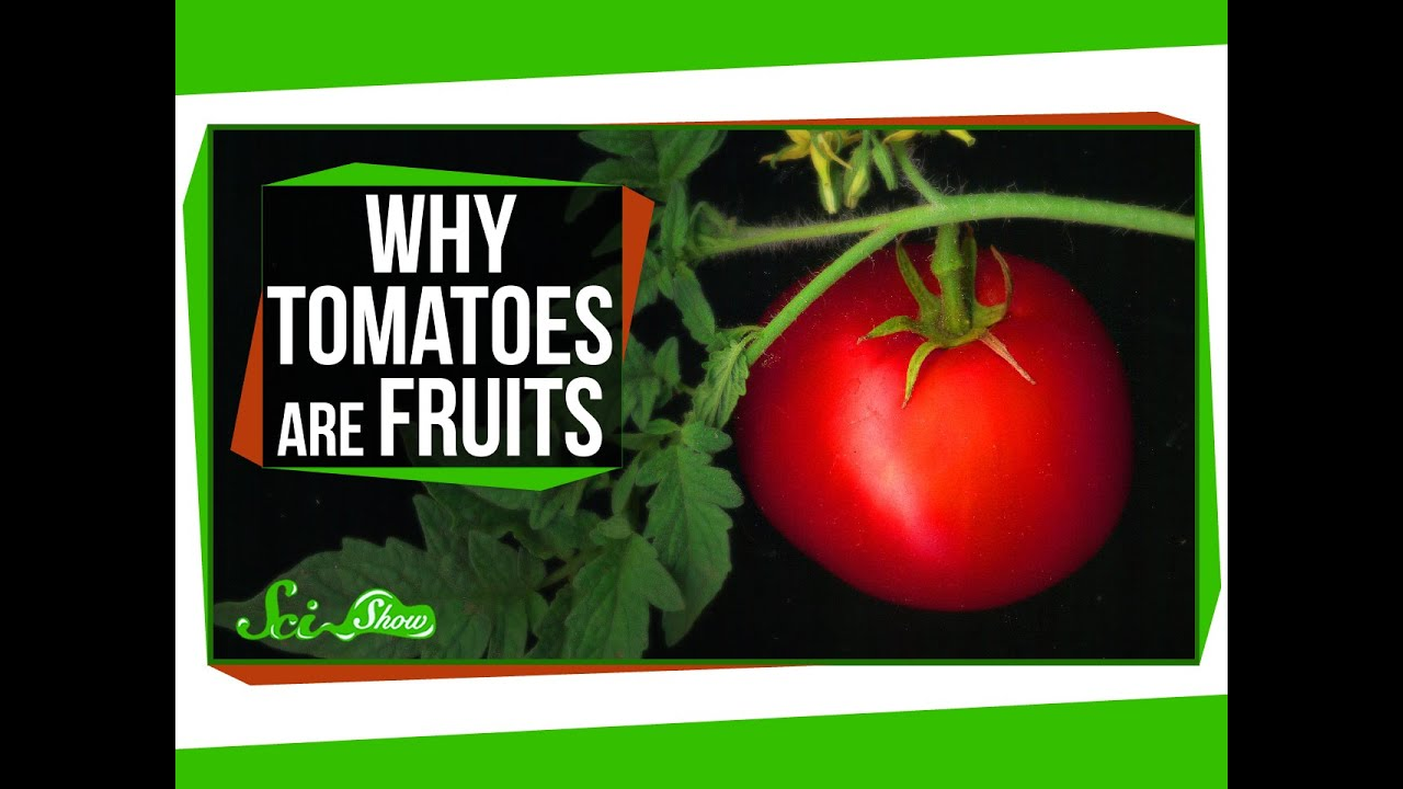 Why Tomatoes Are Fruits And Strawberries Arent Berries Youtube