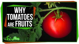 Why Tomatoes Are Fruits, And Strawberries Aren't Berries