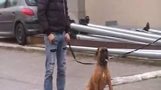 (a Voir) Inedit Chien Hyper Agressif / Sym Dog Www.symdog.fr