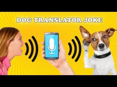 Hunde übersetzer