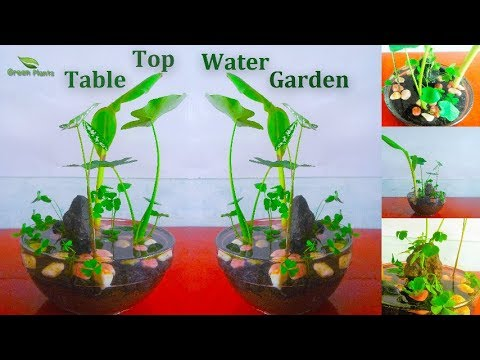 Table Top Water Garden Pond |  Small Water Garden//GREN PLANTS