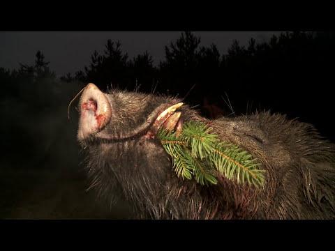Spoločná poľovačka na diviaky Jablonka-Polianka 2015 poľovnícky súd (common hunting boar)