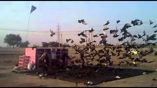 Birju Ustad Delhi - 55