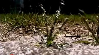 Termite Control - Signs of Termites - Orkin Pest Control