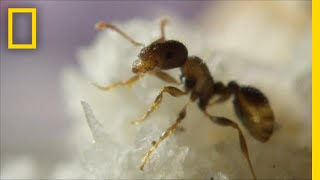 Ants Help Clean New York City By Eating Your Food Scraps | One Strange Rock thumbnail