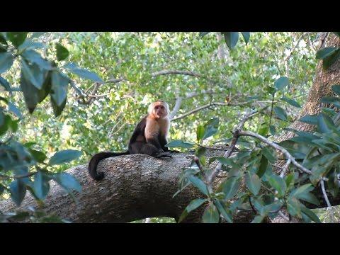 Cuero Y Salado Wildlife Refuge - Part. 3 - Honduras