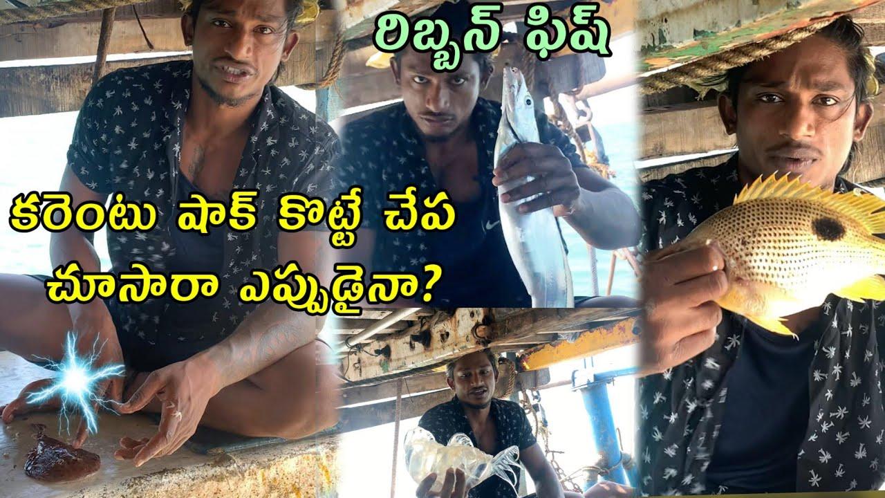 Local boi Nani   Current fish   Ribbon Fish   Lane Snapper Fish   Telugu Vlogs   Vizag Vlogs