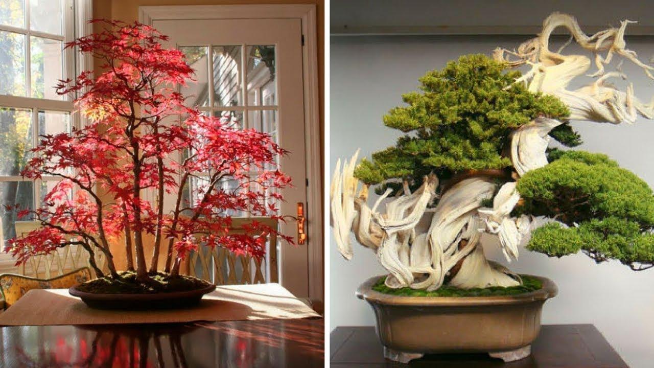 """""""Mãn nhãn"""" những chậu cây cảnh bonsai đẹp nhất thế giới!"""