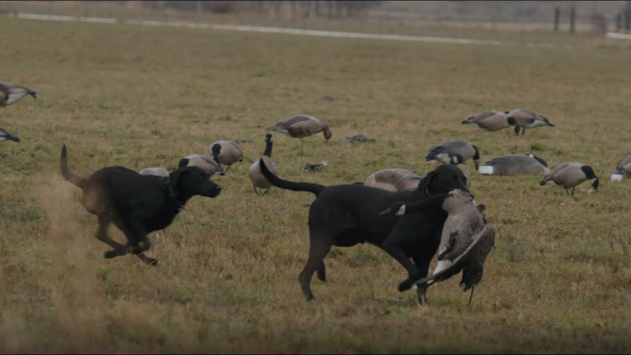 Broad Valley - A Goose and Duck Hunting Film by Slade Northwest